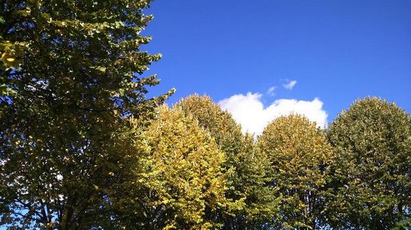 nature en automne